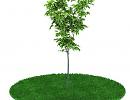 3D модель  Дерево