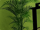 3D модель  комнатная пальма
