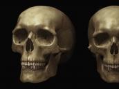 """zilum """"Skull"""""""