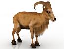 3D модель Баран гривистый