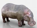 3D модель Бегемот