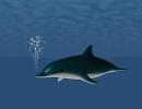 3D модель Дельфин