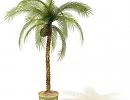 3D модель Пальма домашняя