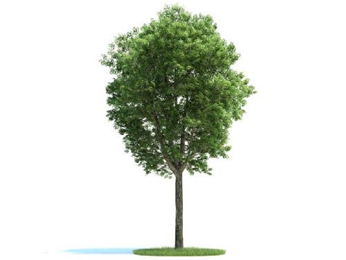Движущиеся модели из дерева